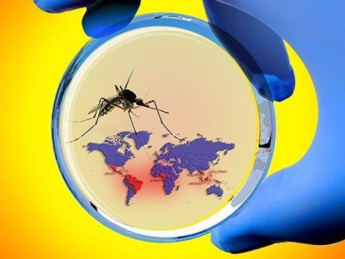Вирус Зика вызывает пороки развития