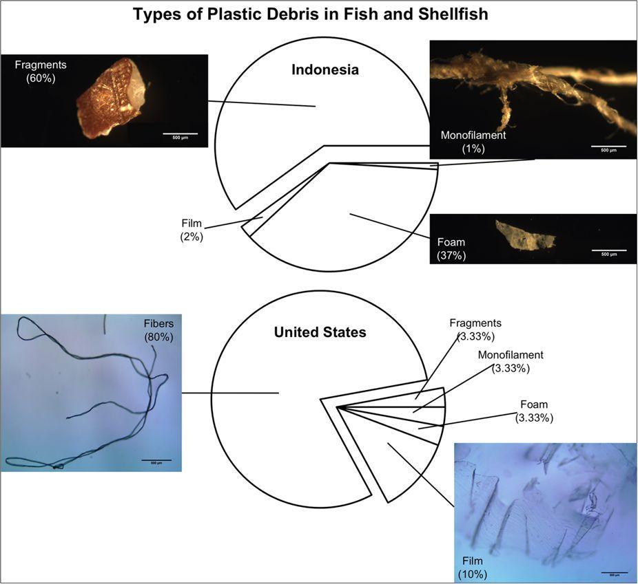 Пластиковые отходы уже проникли в пищу людей