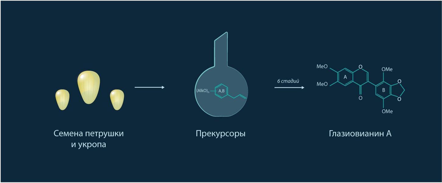 Схема получения глазиовианина А