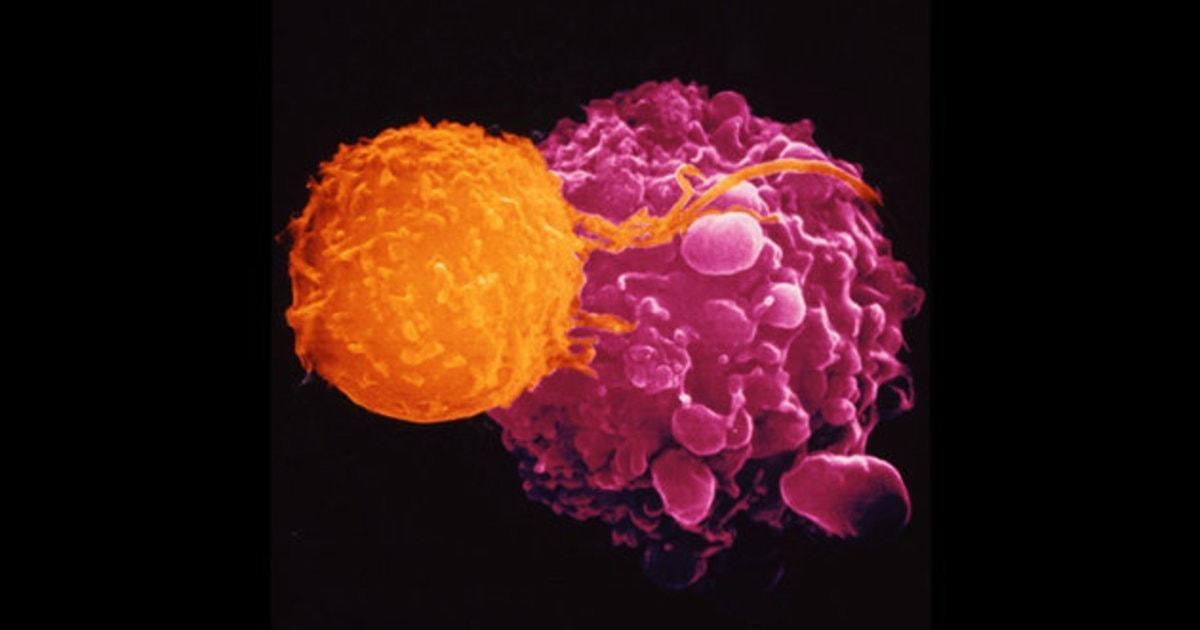 Рак кожи предлагают лечить герпесом