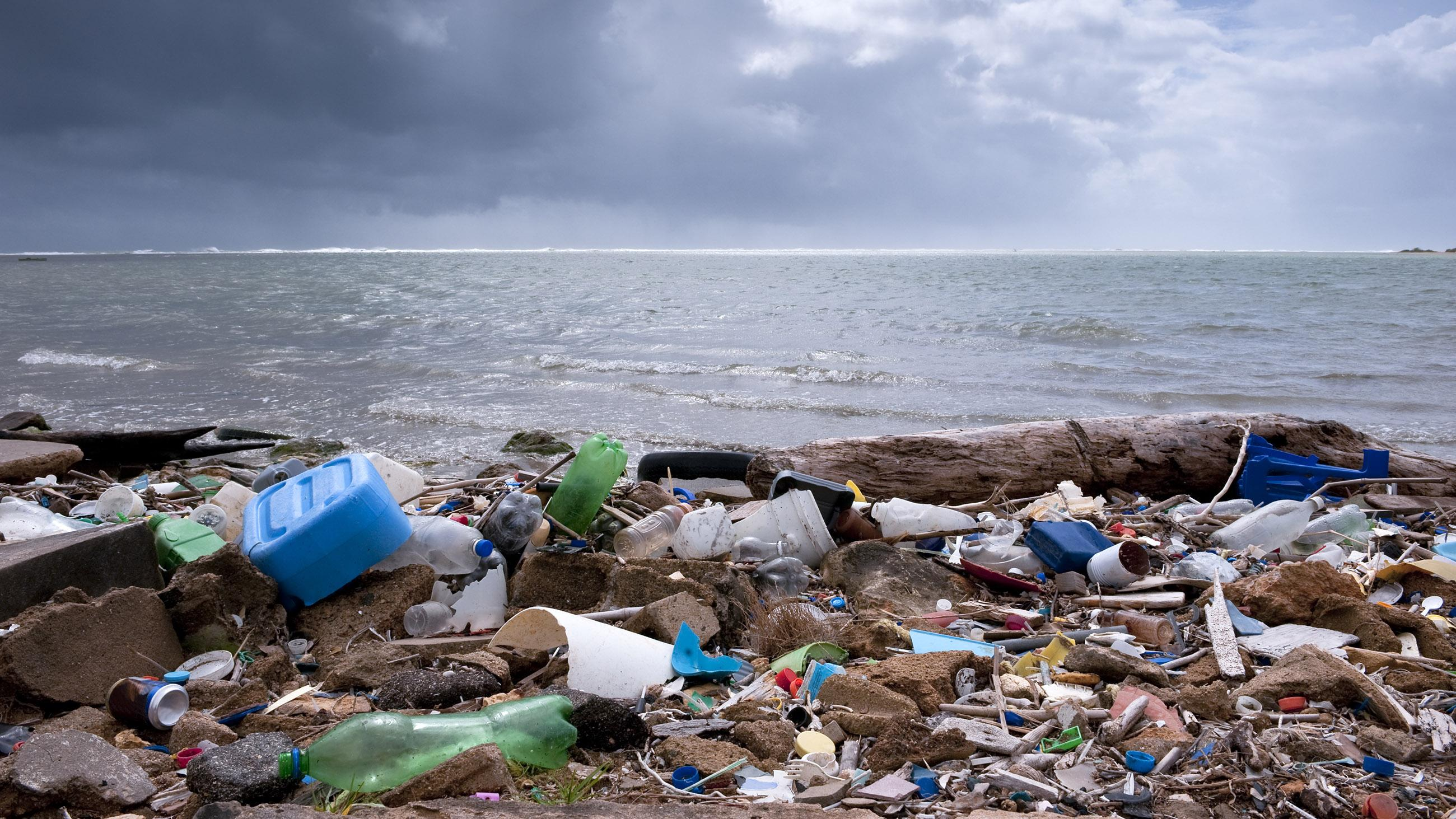 Ракообразные Тихого океана начали поглощать пластик