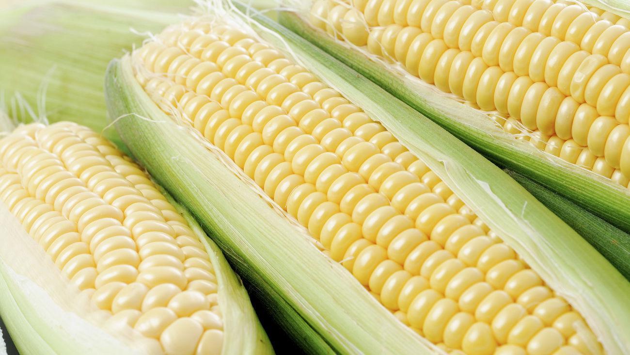 5 распространенных мифов о кукурузе