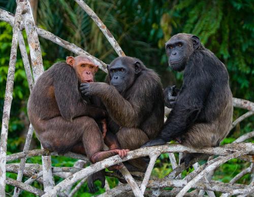 обезьяны читают чужие мысли