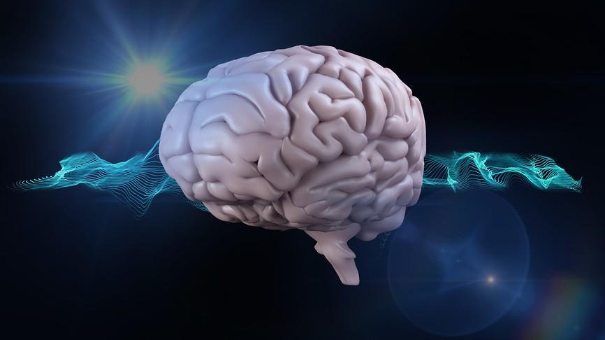 мужского и женского мозга не существует