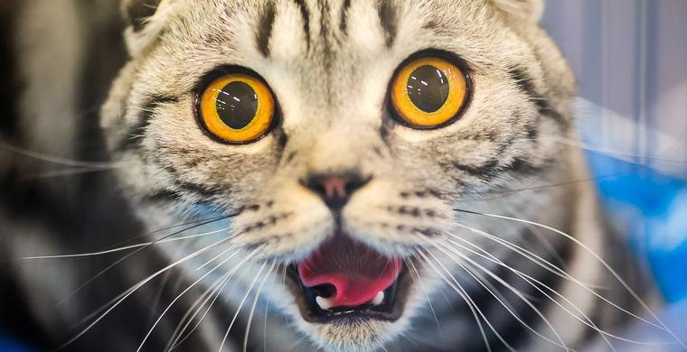 доказана способность кошек распознавать выражение лица владельца