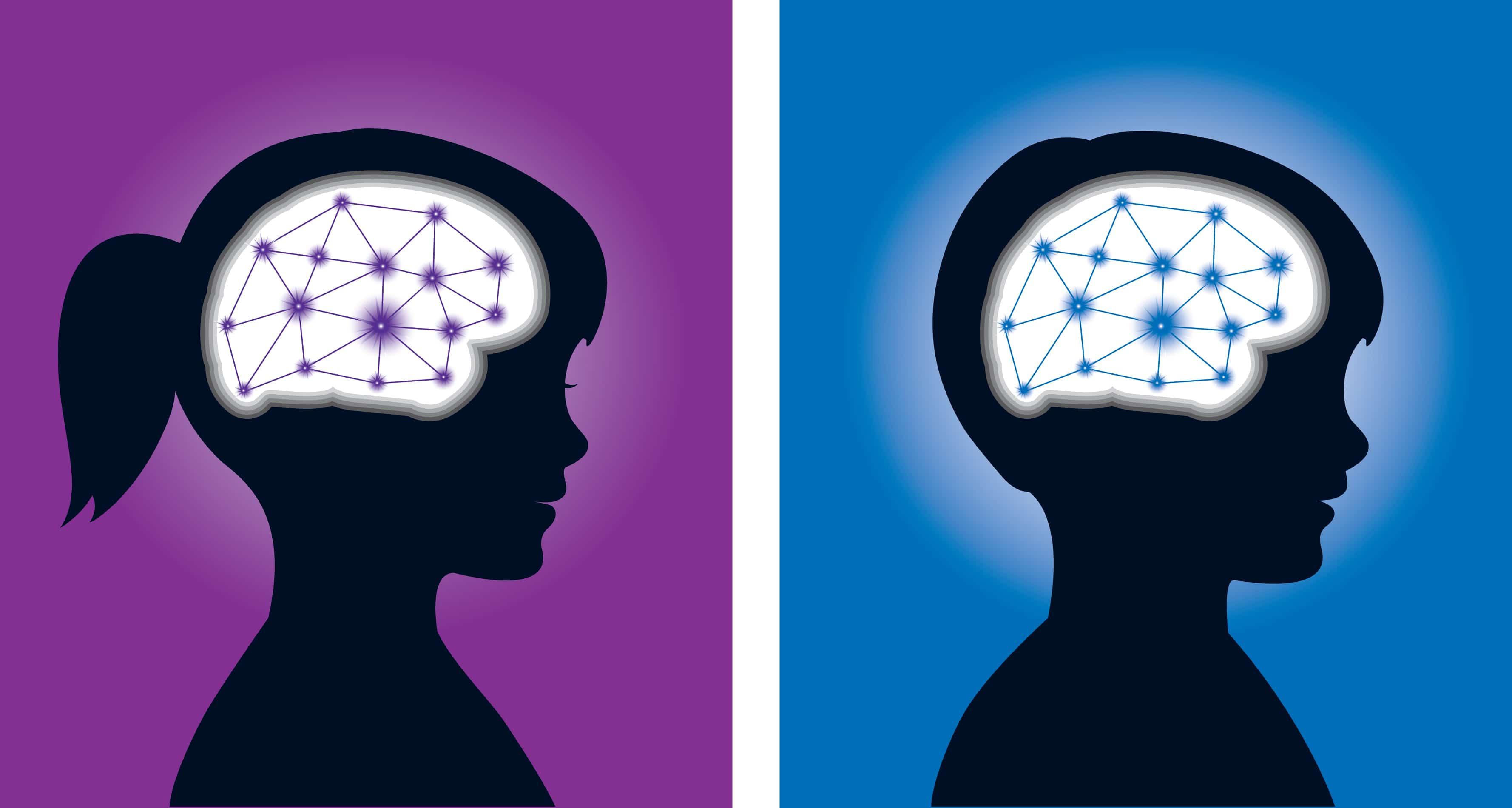 «Мужского» и «женского» мозга не существует