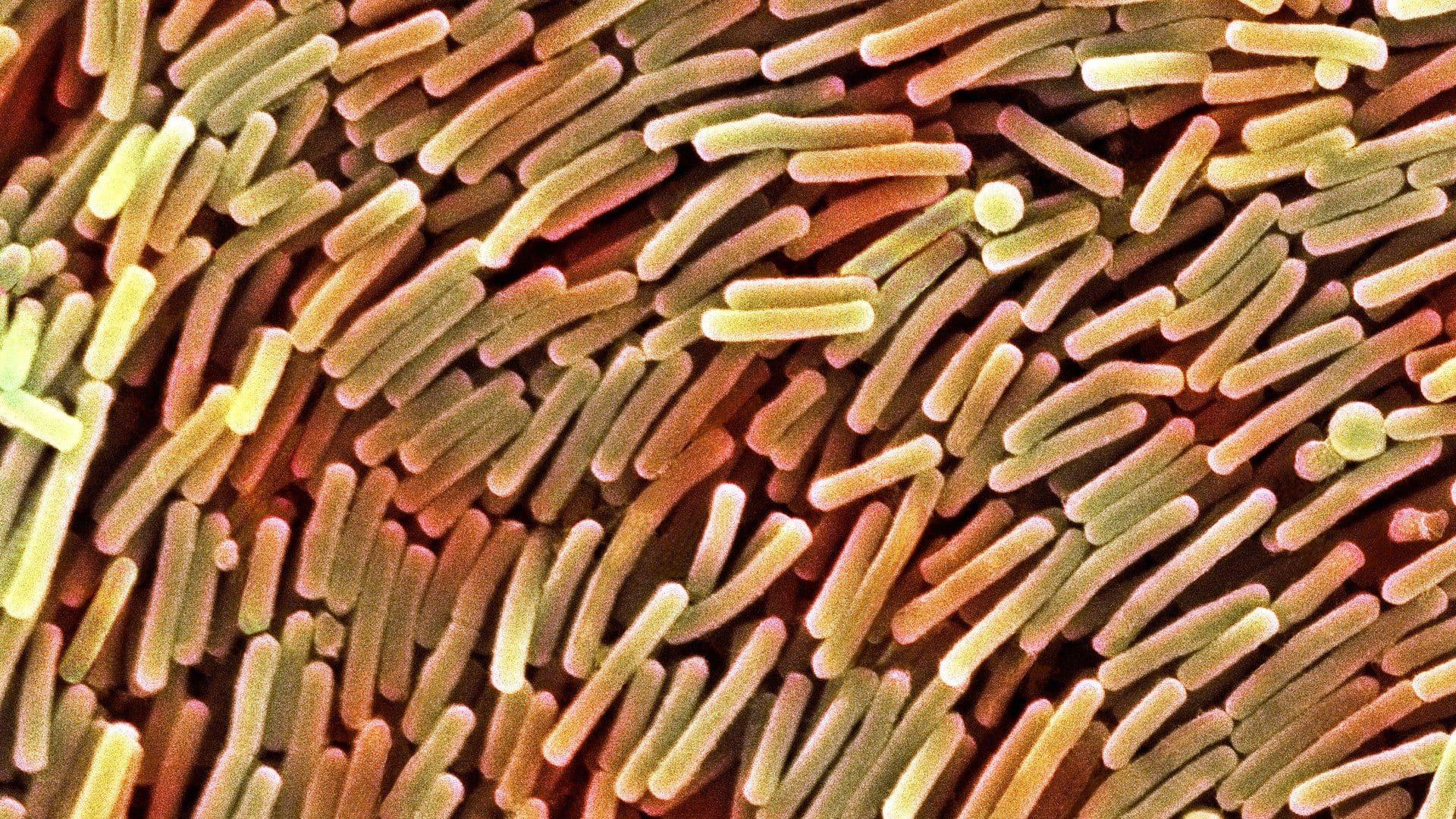 Кишечные бактерии борются с аллергией