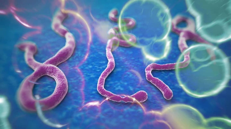 Эбола оставляет нервные шрамы на сетчатке
