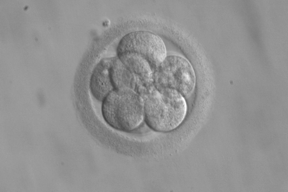 Китайский ученый заявил о рождении генетически отредактированных детей