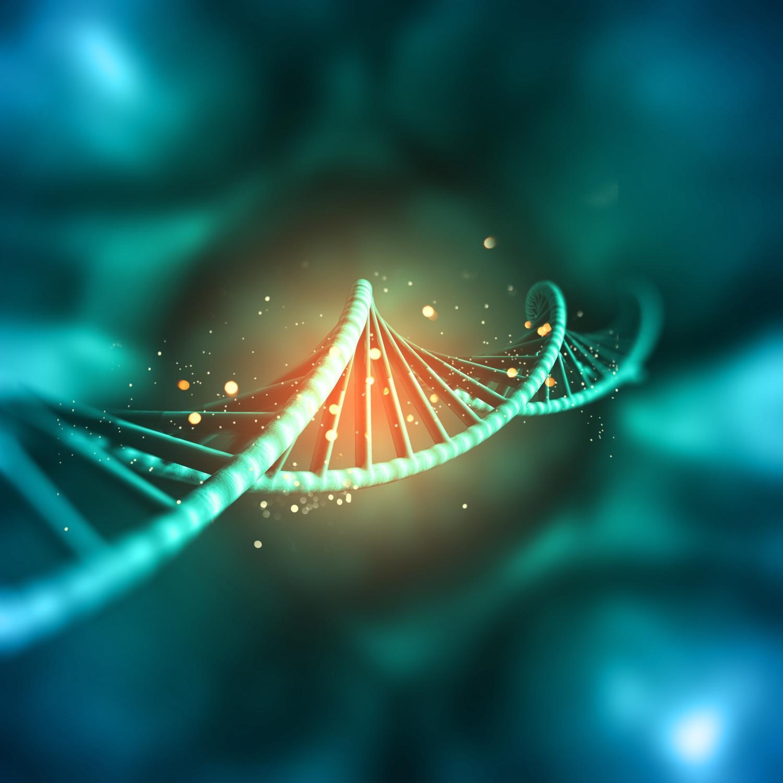 исследования российских ученых о ранних стадиях эмбриогенеза