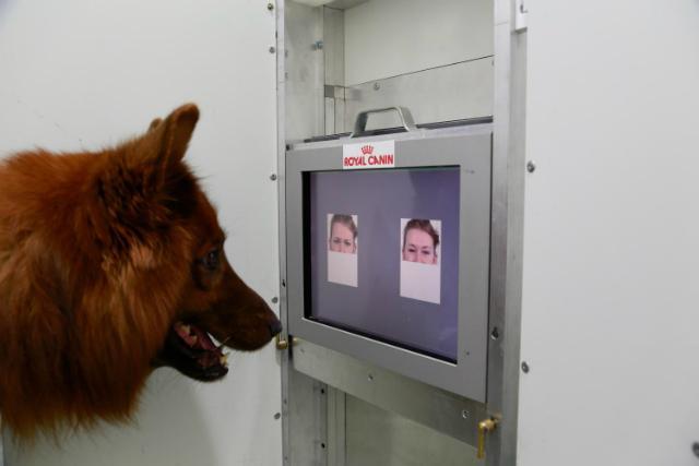 домашние собаки понимают человеческую мимику
