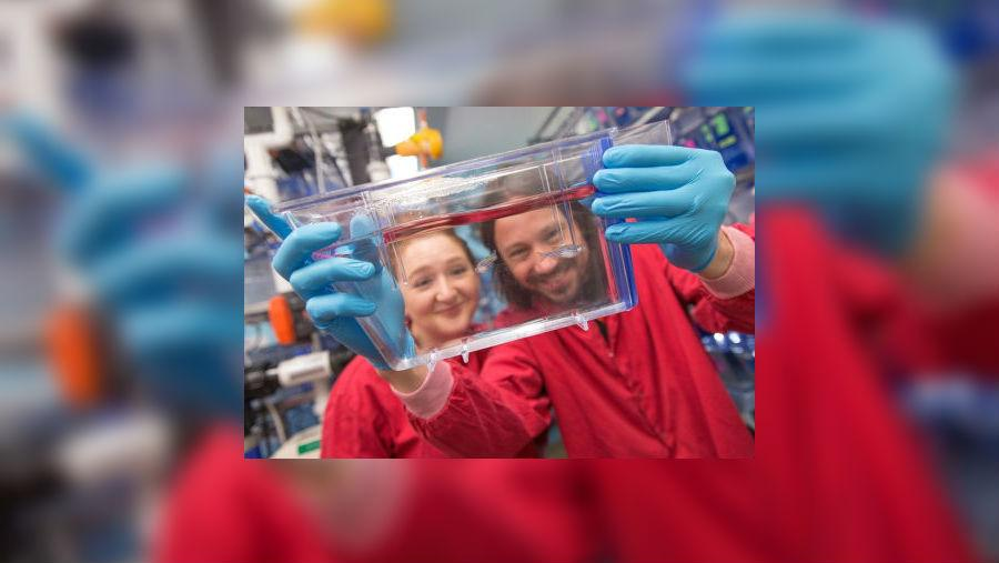 хищные бактерии стали уникальным живым антибиотиком