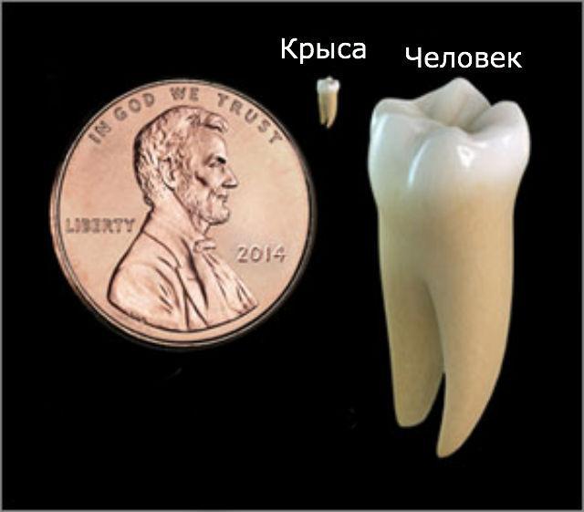 вместо пломб зубы можно будет лечить светом лазера