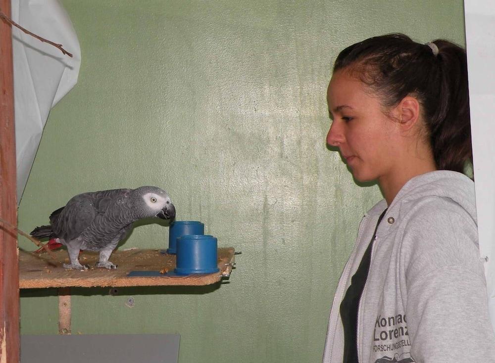 Попугаи понимают причинно-следственную связь на уровне трёхлетнего ребенка