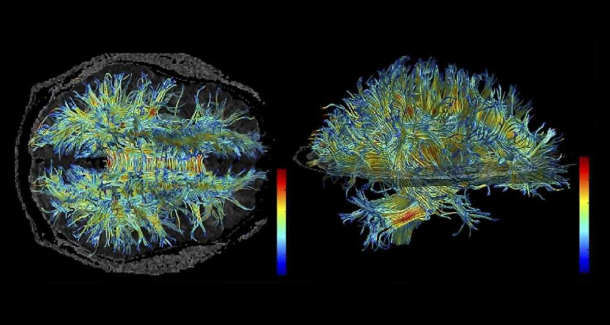 Как наш мозг понимает других