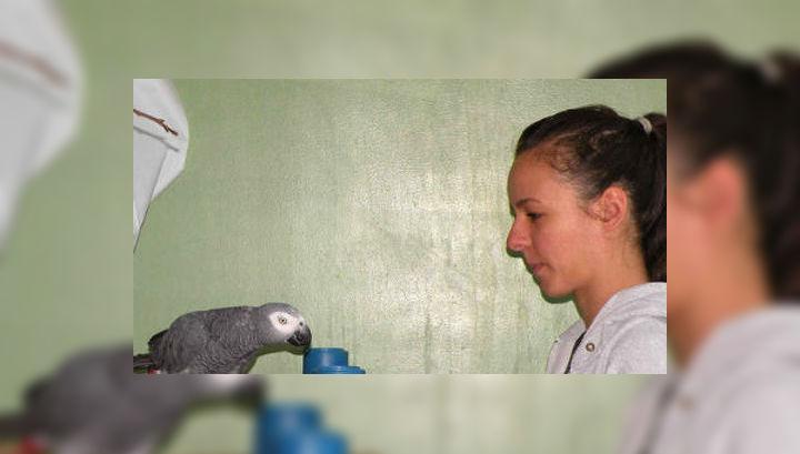 попугаи понимают причинно-следственную связь