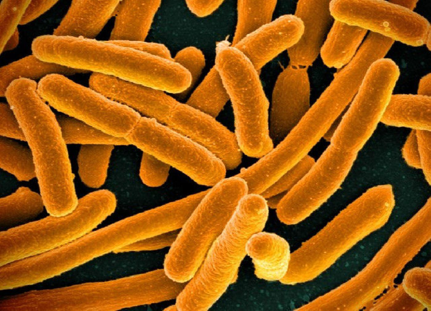 микрогравитация придала бактериям жизненных сил
