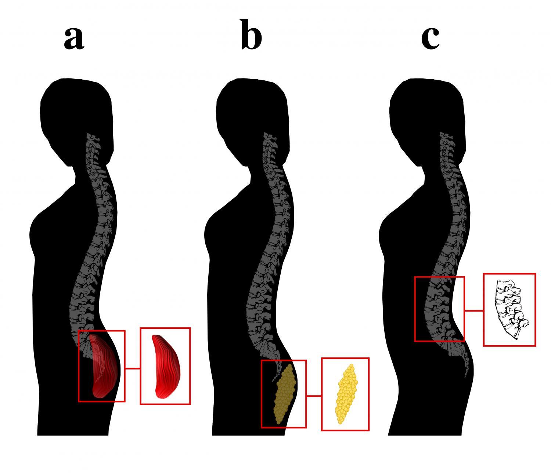 Мужская любовь к изгибам женского тела имеет эволюционные корни