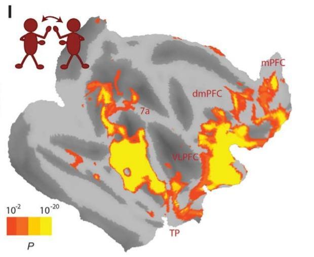 из чего состоит социальная сеть мозга