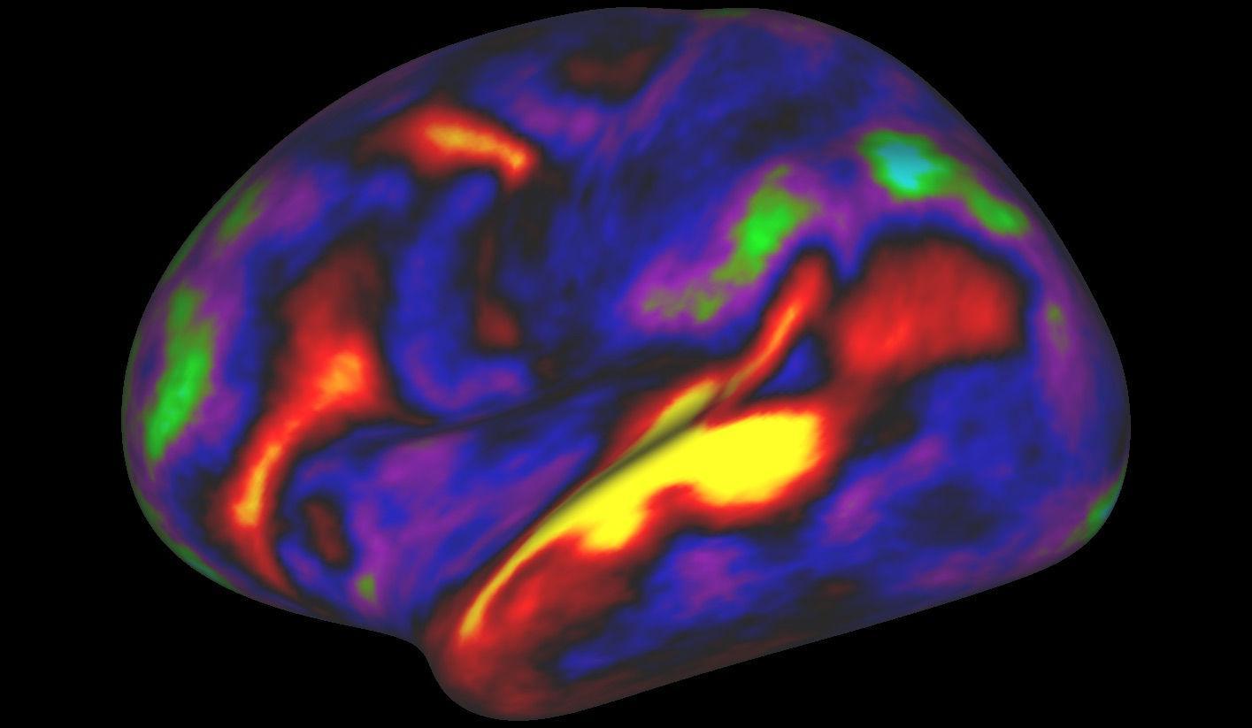 Коре мозга сделали новую карту
