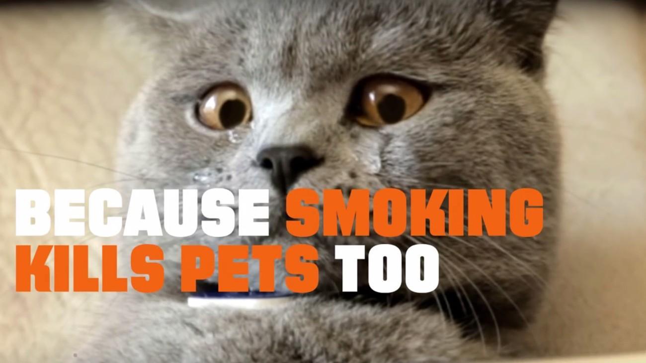 видео с кошками используют для борьбы с курением