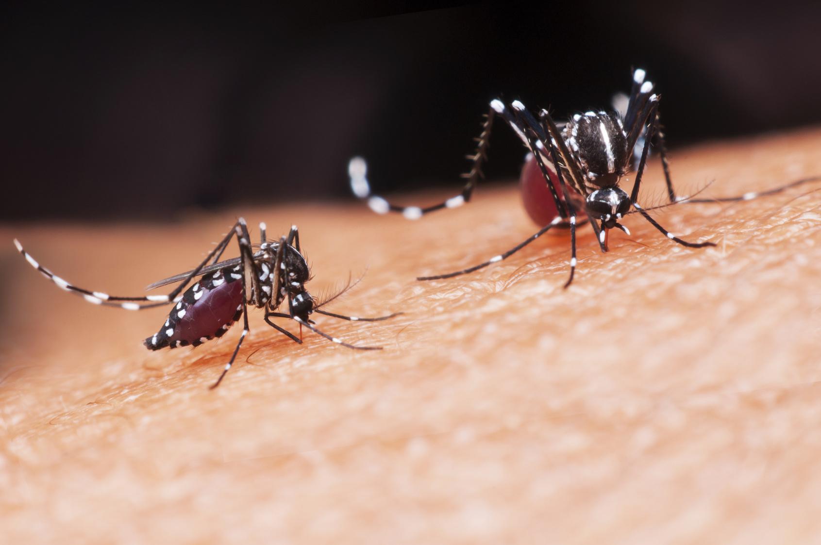 Иммунитет к лихорадке денге защитил детей от симптомов вируса Зика