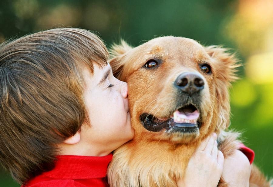 собаки помогают детям справиться со стрессом