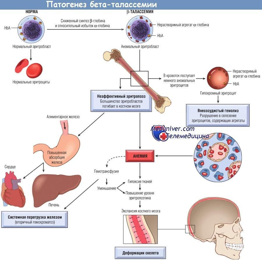 Разработан безопасный метод исправления мутаций кроветворных клеток