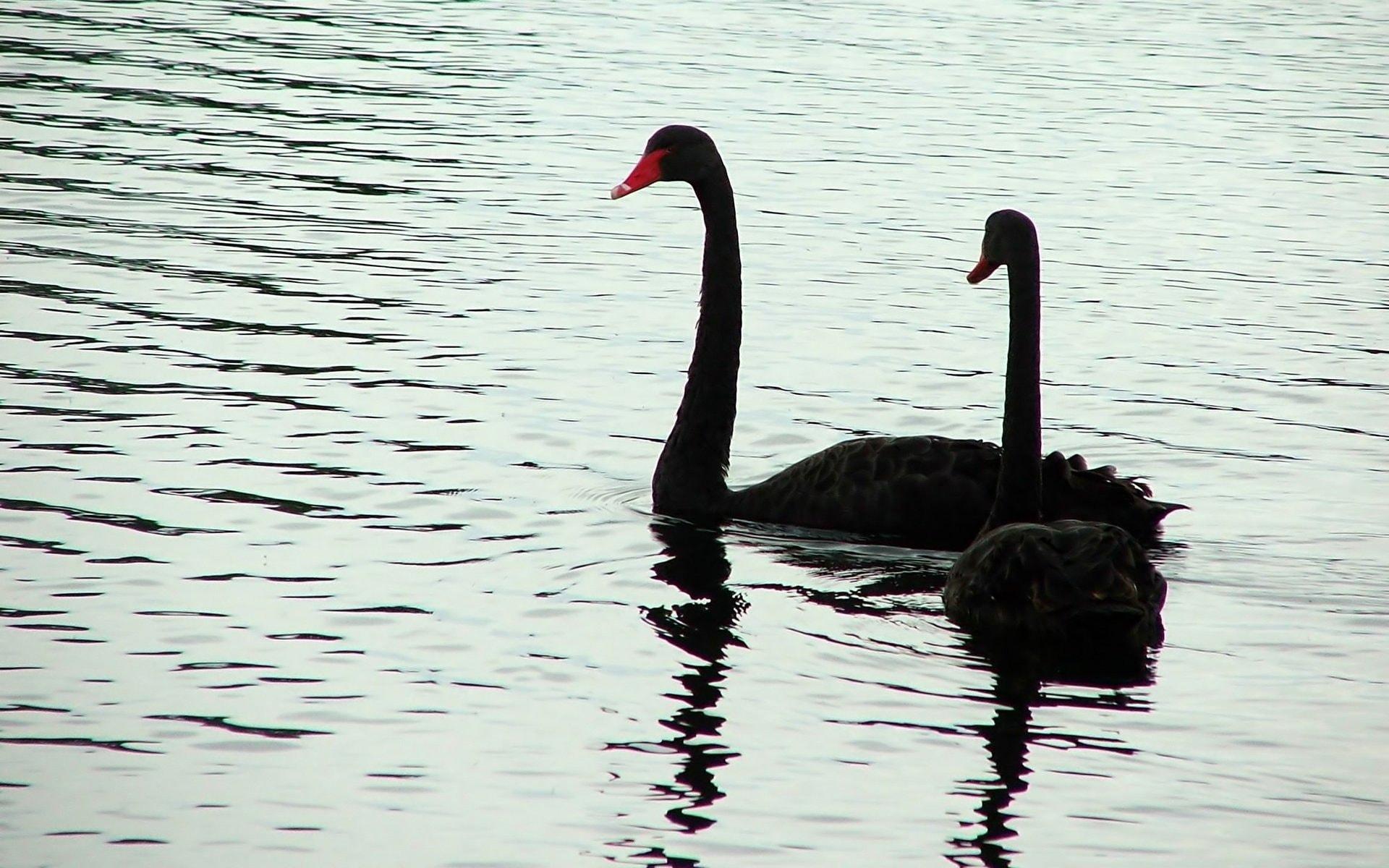 Природа придумала моногамию для защиты потомства