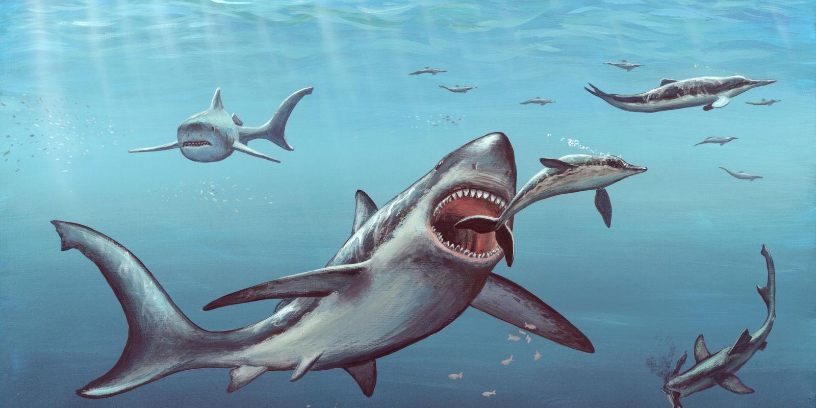 Вымирание мегалодона связали с исчезновением небольших китов