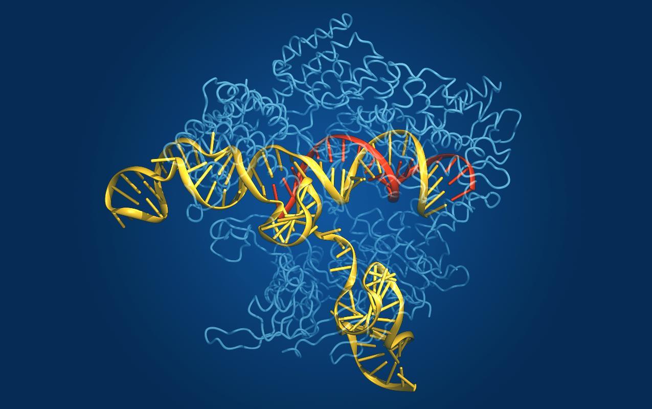 Ученые обнаружили побочные эффекты генной терапии