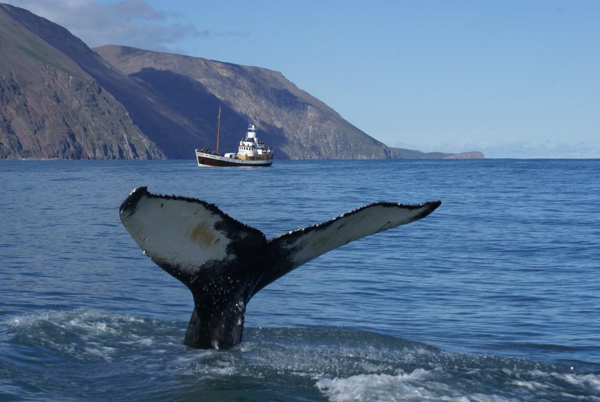 Большой размер китов связали со стремлением съесть побольше