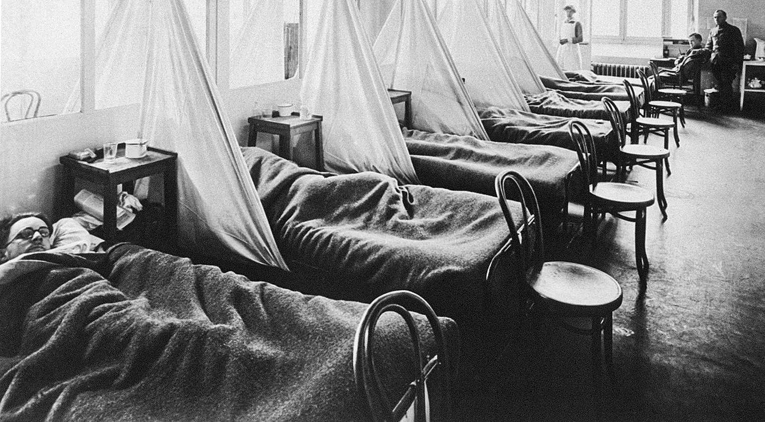 Учёные изучили историю вируса гриппа и составили древо отношений