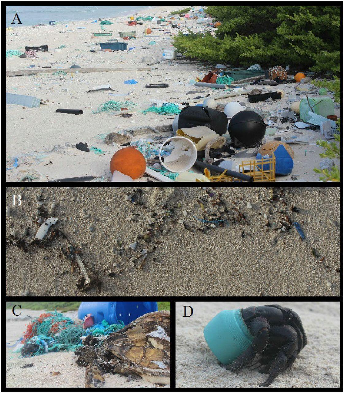Пластик добрался до отдаленных необитаемых островов Тихого океана