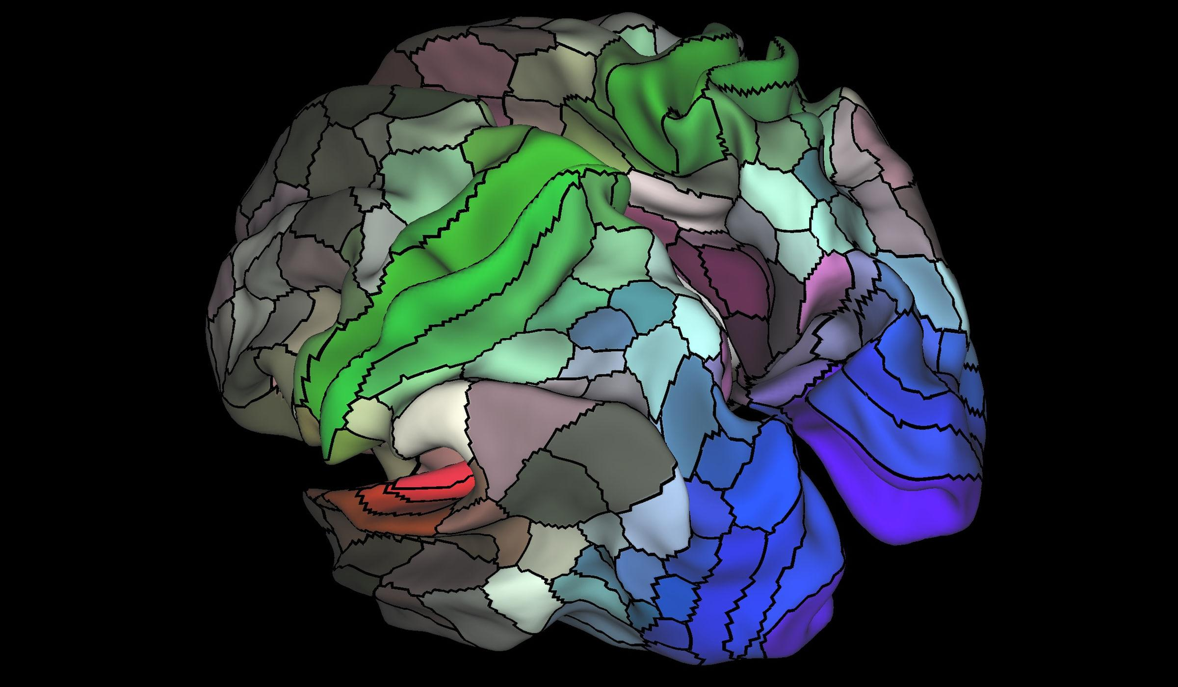 brain mapping project