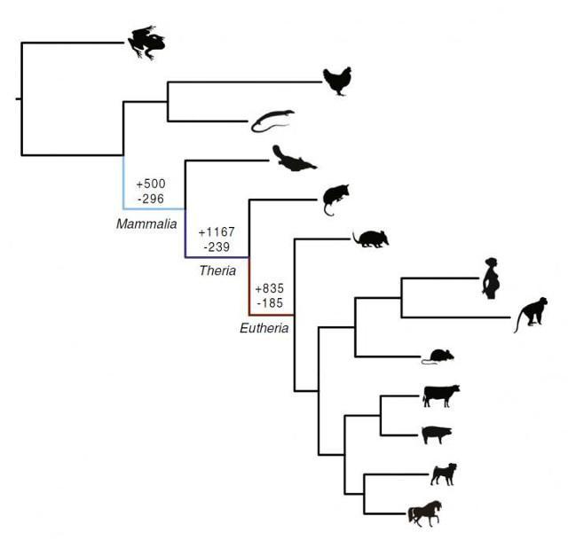 прыгающие гены научили млекопитающих беременности