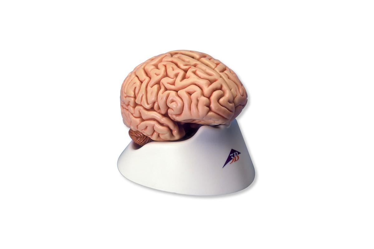 недосып включает в мозге механизм самоуничтожения