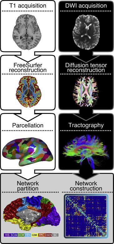 учёные узнали, как взрослеет мозг