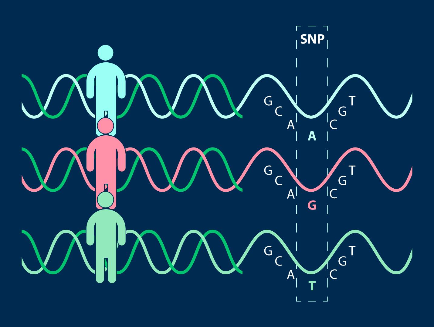 Аутоиммунная погрешность генетического кода