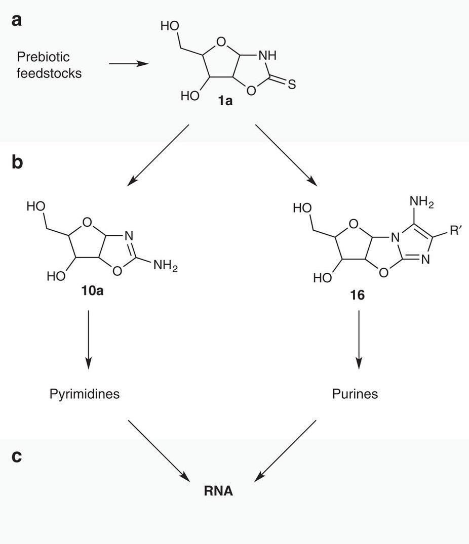 Химики нашли универсальный путь возникновения самых первых РНК