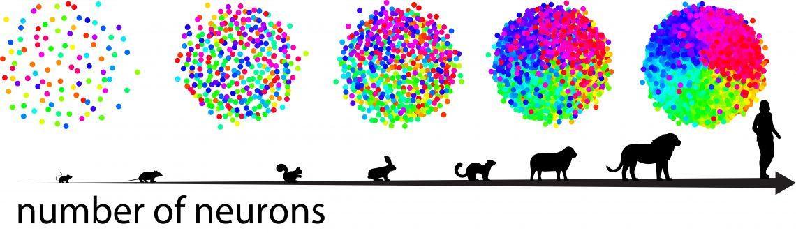 Как формируются нейронные карты?