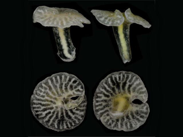 морские грибы могут стать новой ветвью на древе жизни