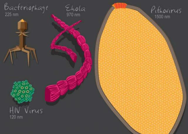 новое исследование показало, что вирусы являются самыми древними живыми существами