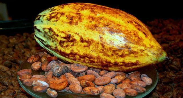 генетики составили карту генома какао