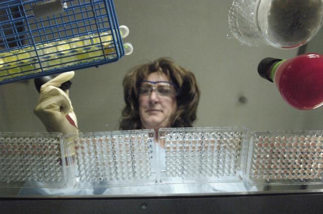 новый вирус птичьего гриппа H6N1 обнаружен у 20-летней девушки