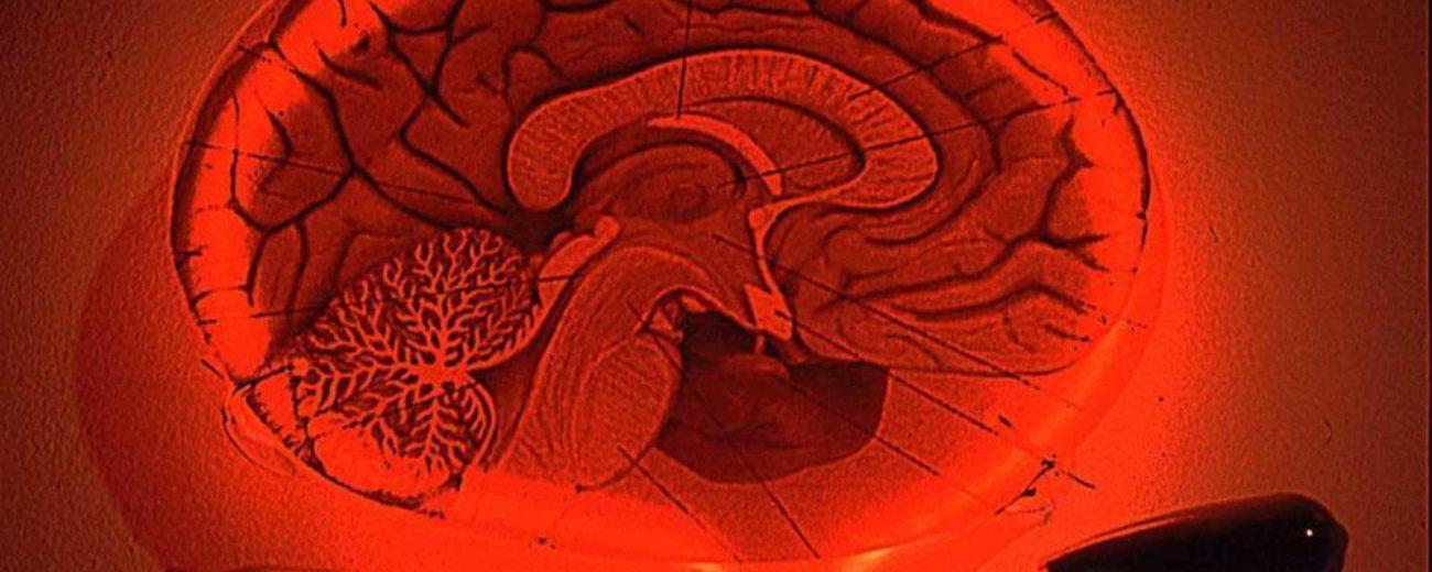 сможем ли мы стать сверхсильными умственно