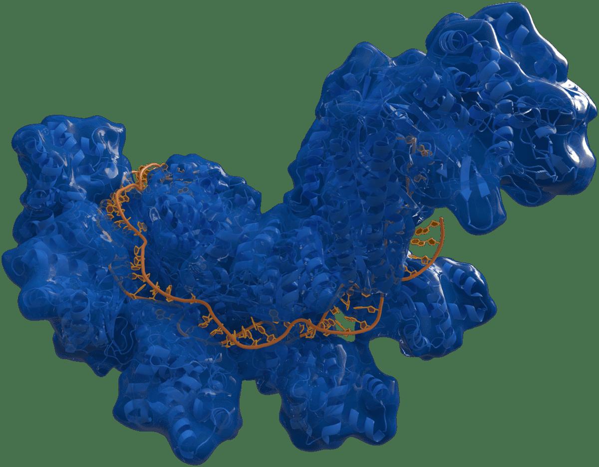 метод редактирования генома редактирует много лишнего