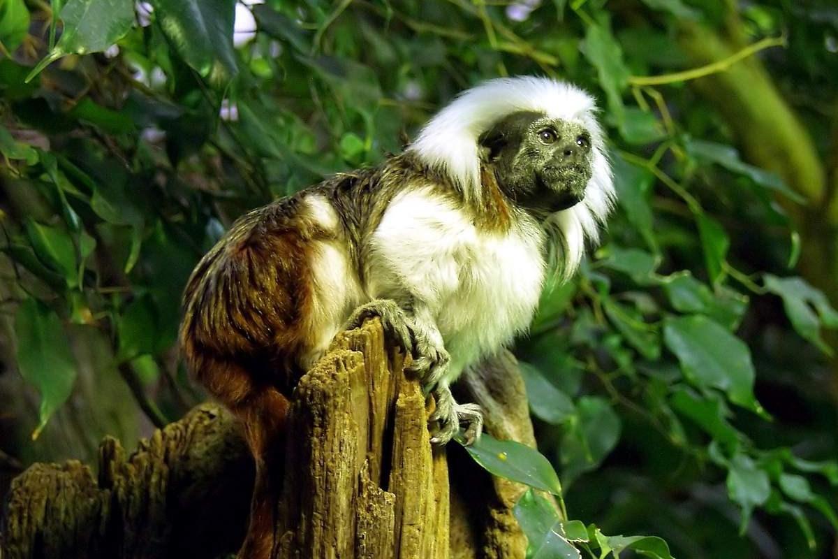 самоконтроль у обезьян зависит от размеров тела