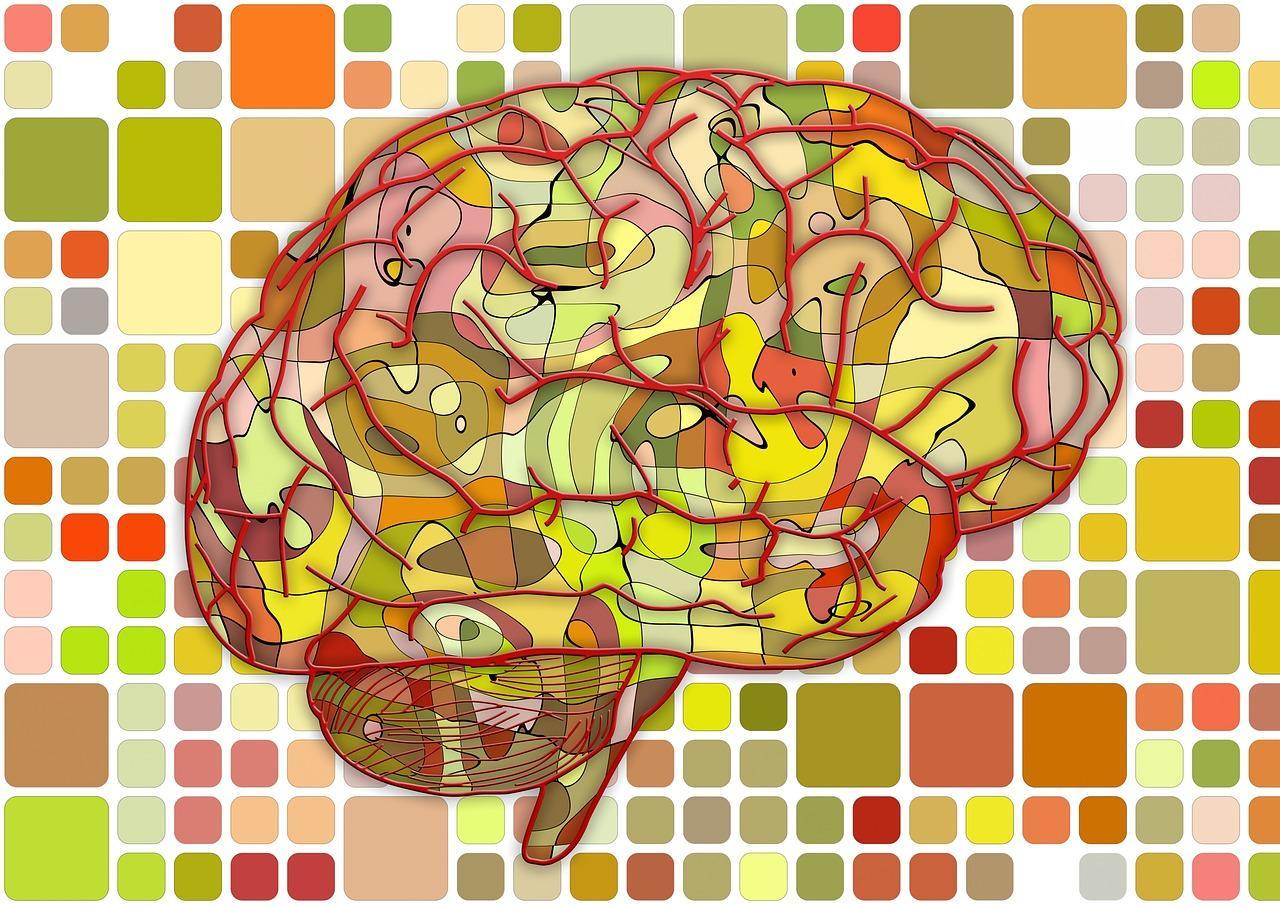 нейронауки для всех: клетки нервной системы