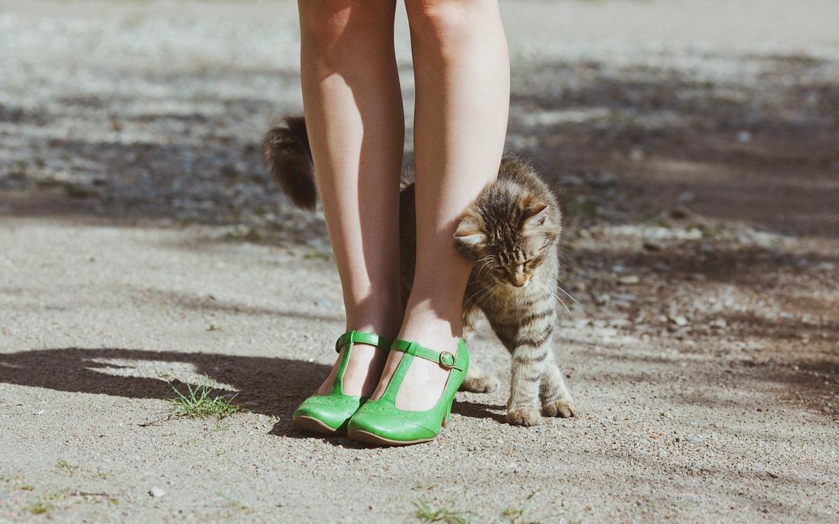 кошкам морда не помеха